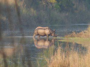 Parc National Bardia Népal rhino