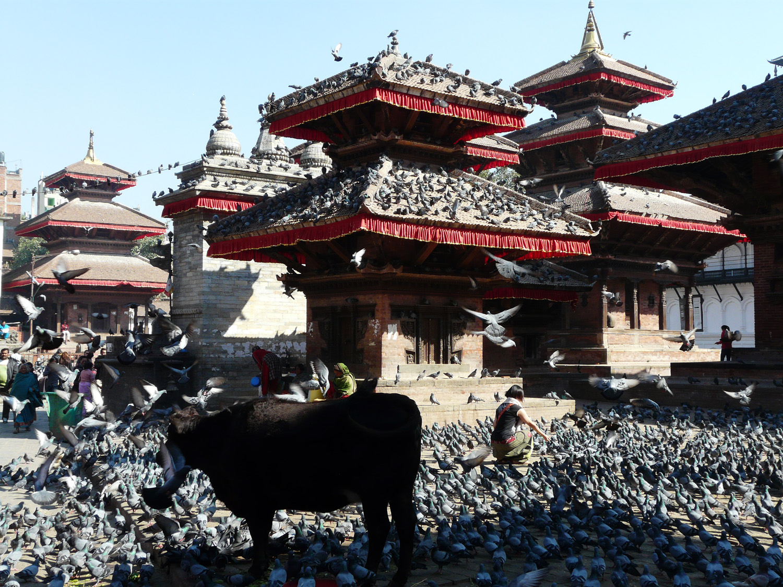 nepal-katmandou2